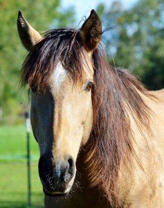 Ernährung Pferde Diätetik