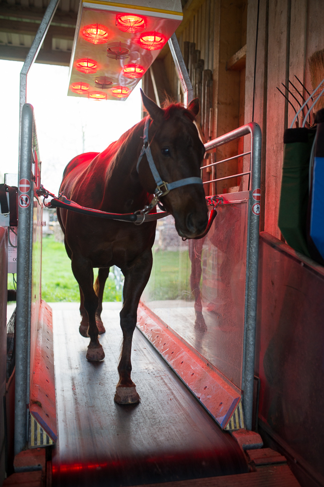 Laufband Pferdelaufband Aspach Reha für Pferde