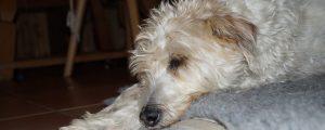 Hunde Osteopathie