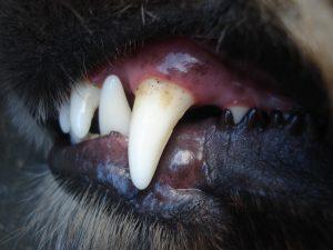 Zahnpflege Zahngesundheit
